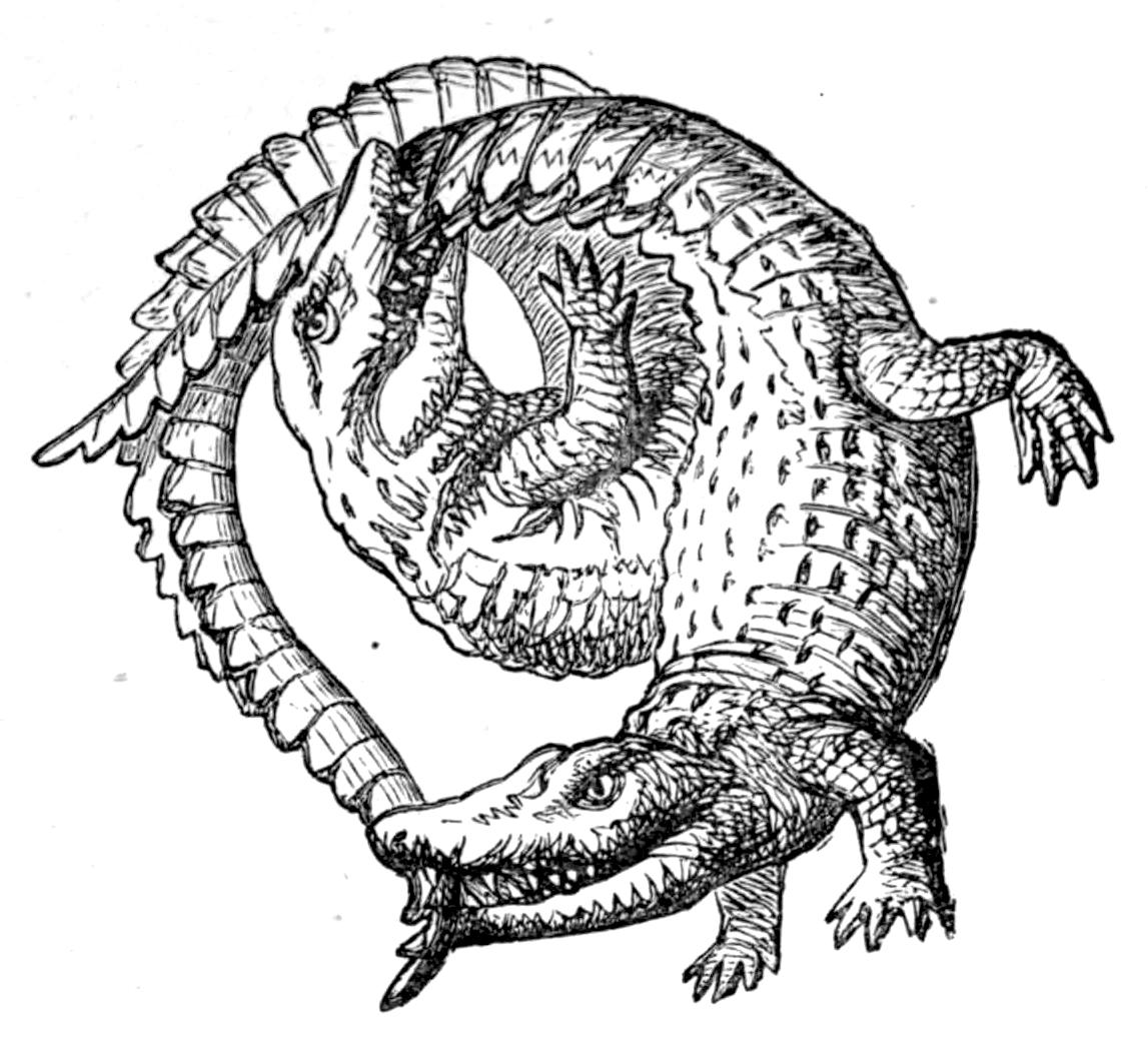 Vintage Alligator Illustration