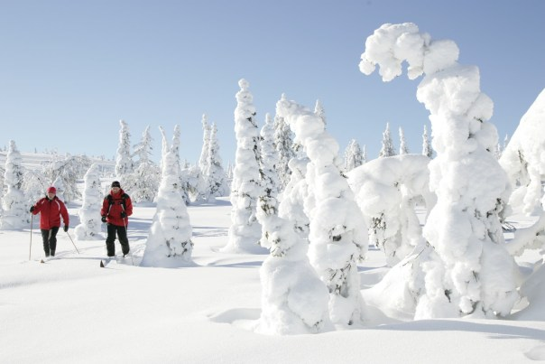 https://i2.wp.com/upload.wikimedia.org/wikipedia/commons/2/23/Skiing_at_Riisitunturi_National_Park.JPG?resize=604%2C403&ssl=1