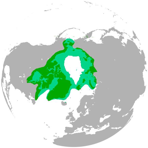 File:Polar bear range map.png