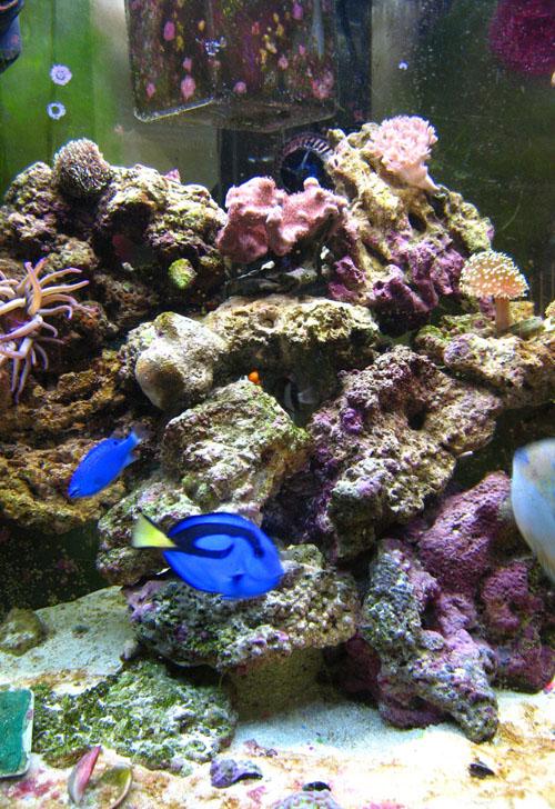 marine aquarium wikipedia
