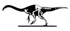 Segnosaurus galbinensis.jpg