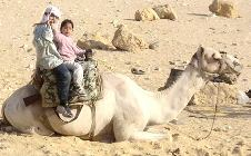 Camelus dromedarius