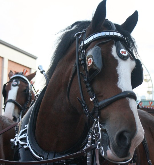 Image result for horse with blinkers
