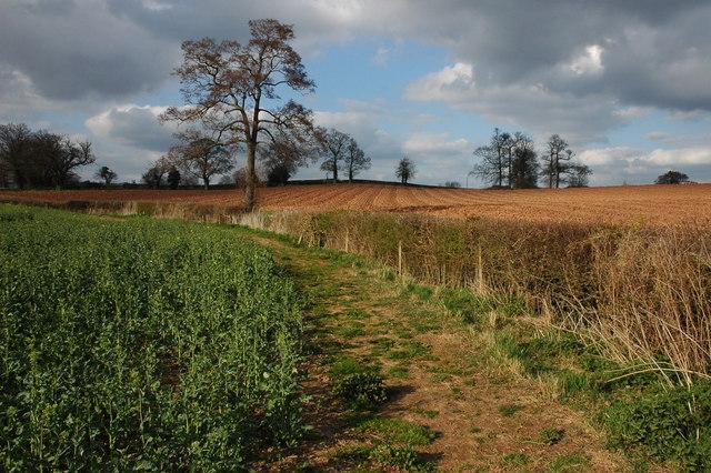 English: The Poet's Path II The Poet's Path II...