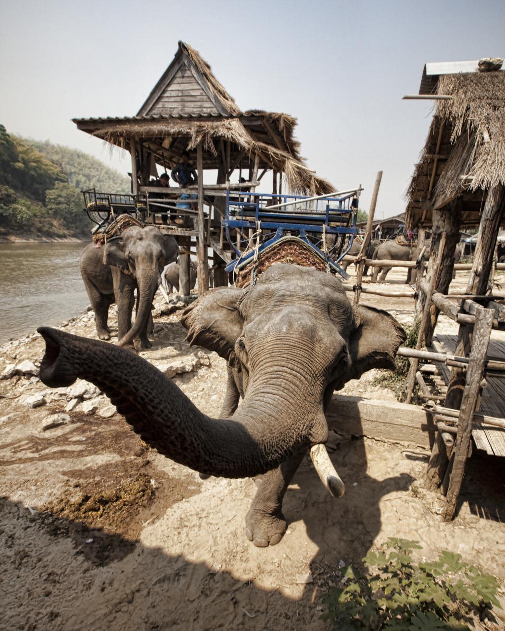 Elephant Crushing