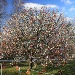 Easter Egg Tree Wikipedia