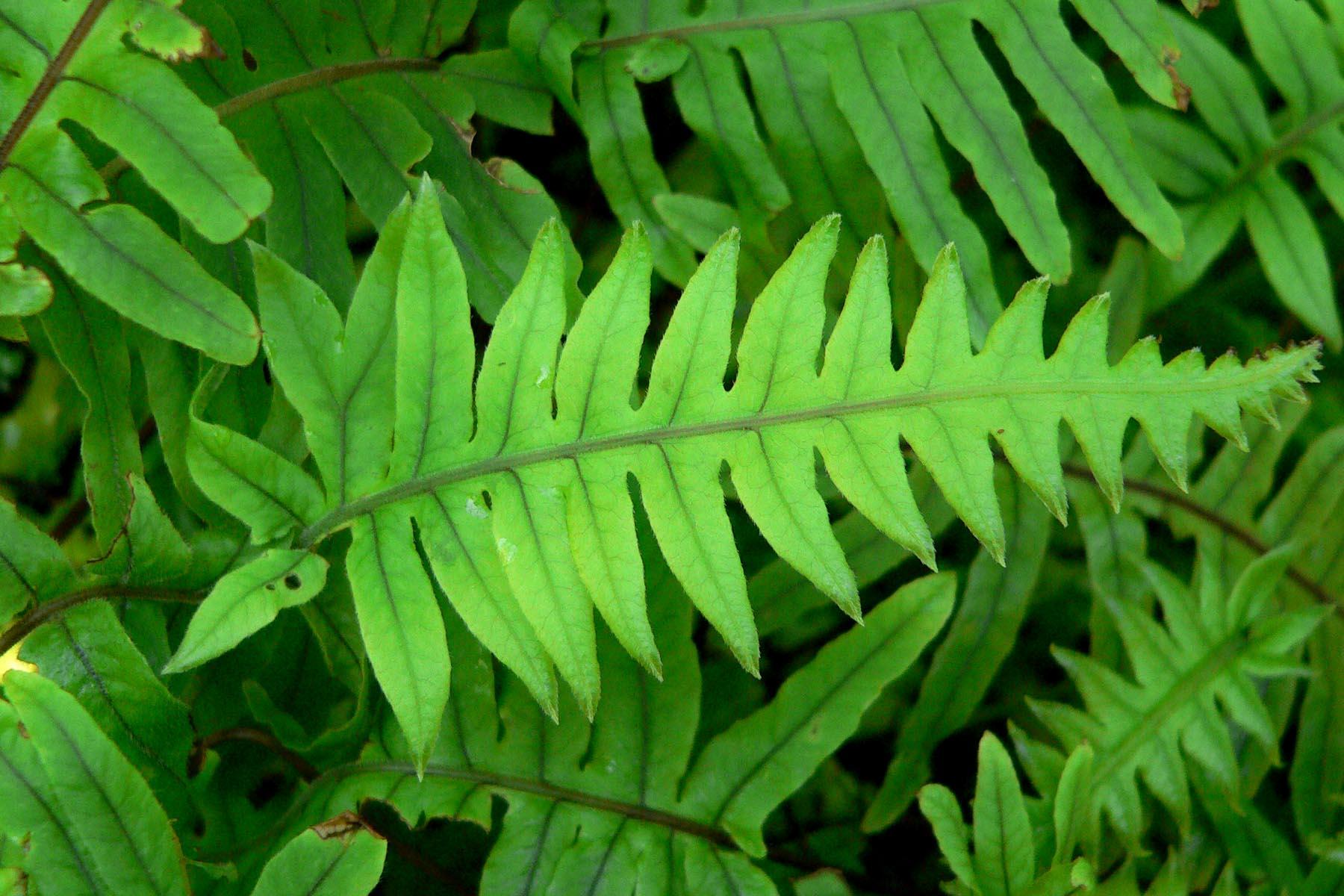 Botiquin Para Baño Casero:Indice por plantas – C