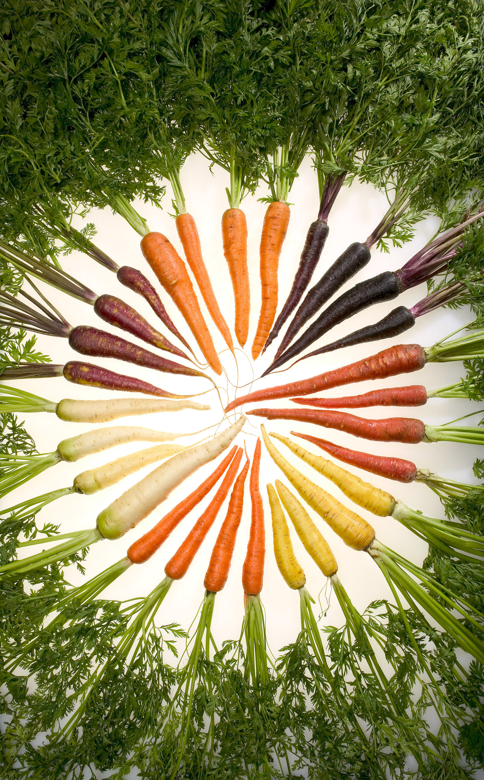 Carrots of Many Colors
