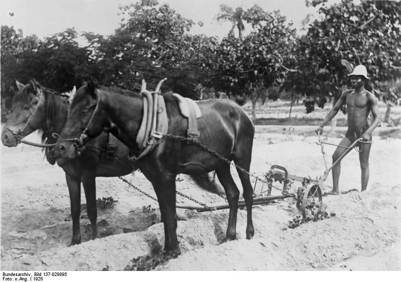 Cotton Farming in Togo, 1928