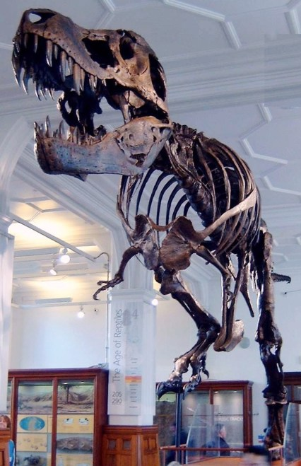 https://i2.wp.com/upload.wikimedia.org/wikipedia/commons/3/33/Stan_the_Trex_at_Manchester_Museum.jpg?resize=426%2C659&ssl=1