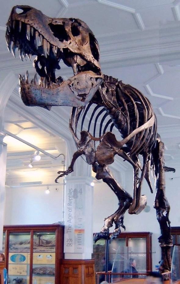 Stan the Trex at Manchester Museum ছবি ব্লগঃ 160 কোটি বছর আগের রাজাদের[ডাইনোসর] ছবি | Techtunes