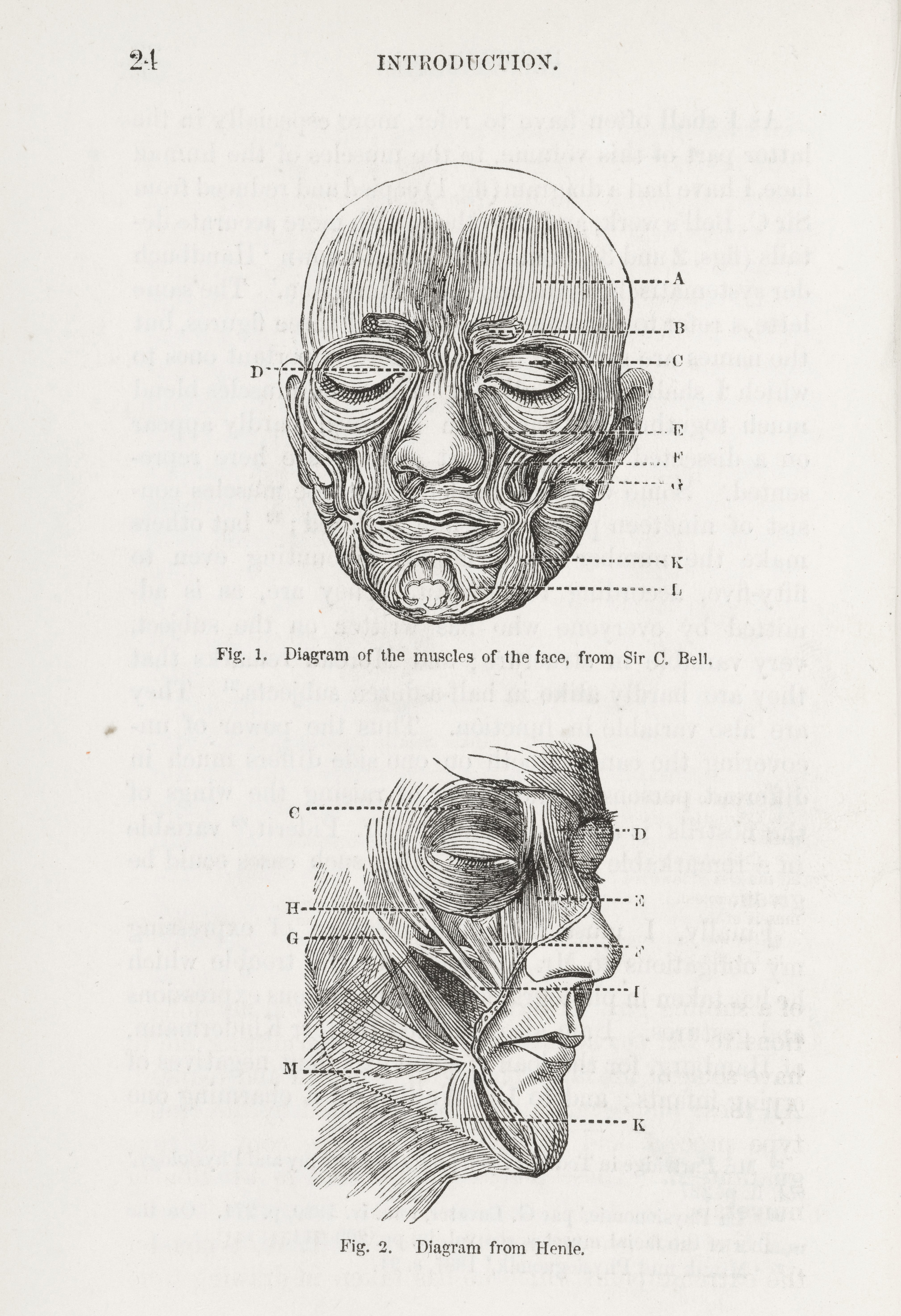 File Diagrams Of Muscles Of The Face From Darwins