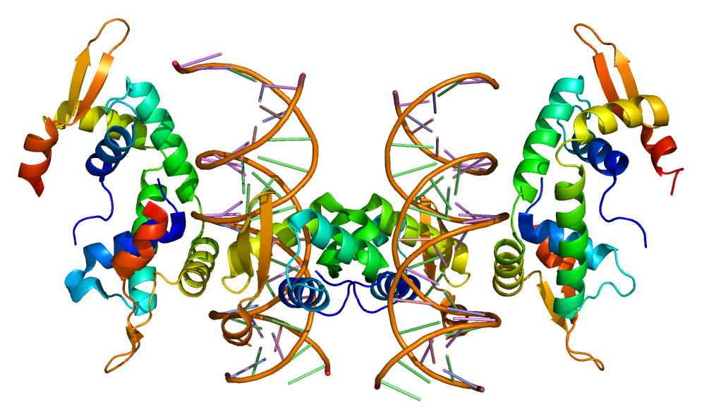 https://i2.wp.com/upload.wikimedia.org/wikipedia/commons/3/37/Protein_FOXP2_PDB_2a07.png