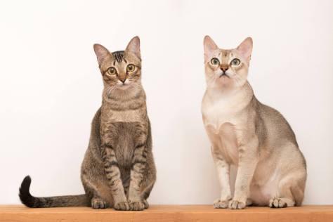 Image result for cat dna