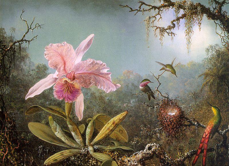 https://i2.wp.com/upload.wikimedia.org/wikipedia/commons/3/3e/Martin_Johnson_Heade_-_Cattelya_Orchid_and_Three_Brazilian_Hummingbirds_CGF.jpg