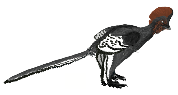 File:Anchiornis martyniuk.png