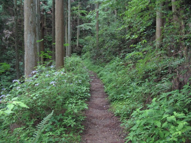 pilgrimage route in Kumano