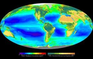 Fotosíntesis  Wikipedia, la enciclopedia libre