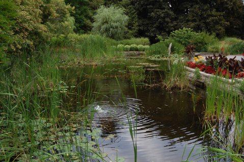Image result for garden pond, ontario