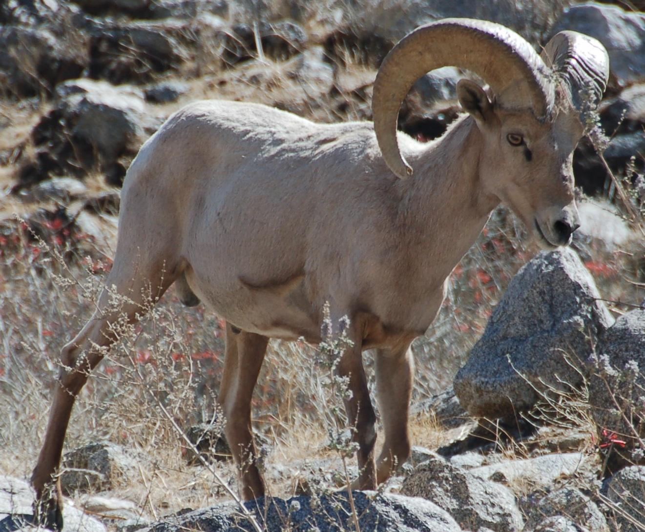 Mihir The Amateur Wildlife Biologist December
