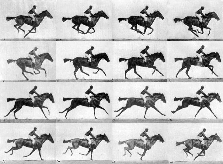 Muybridges Horse in Motion