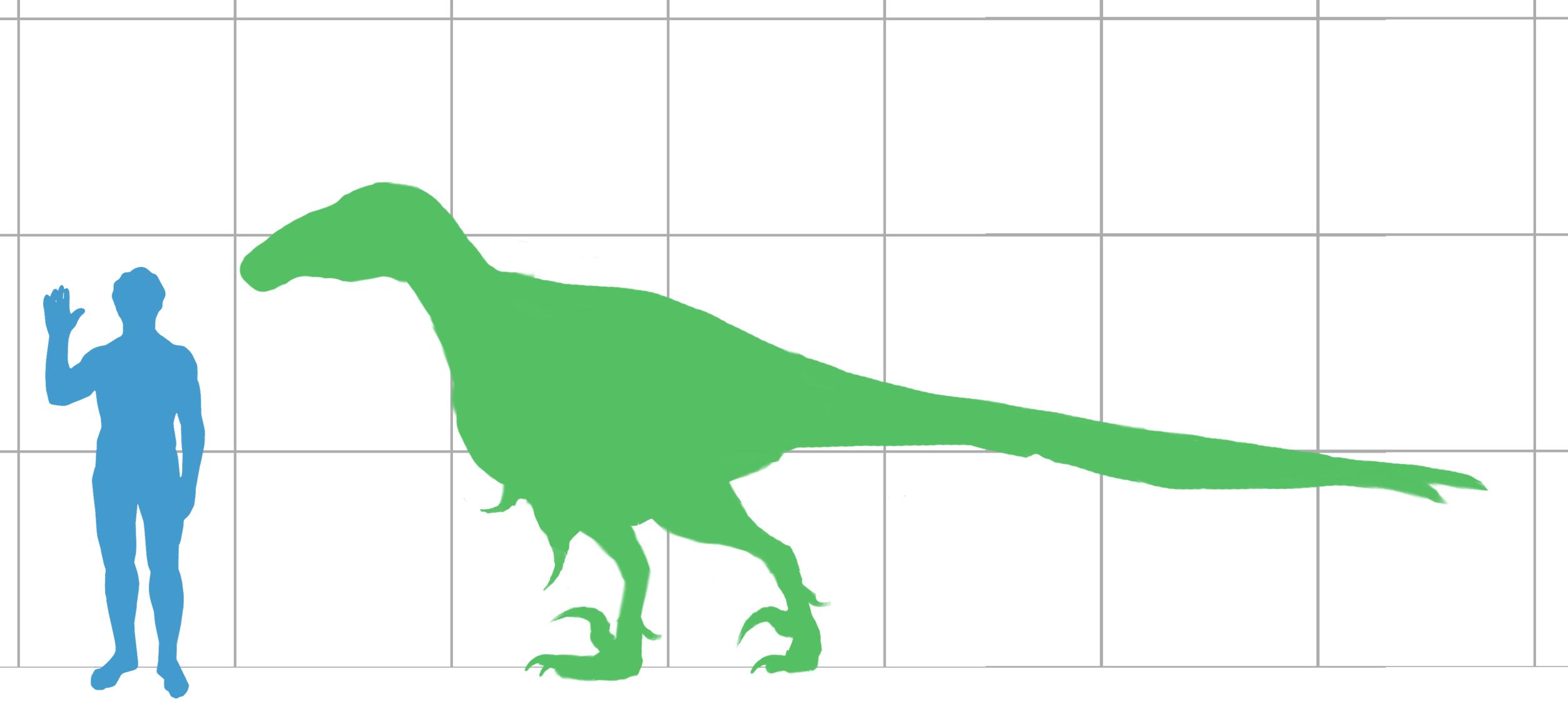 File:Utahraptor scale.png