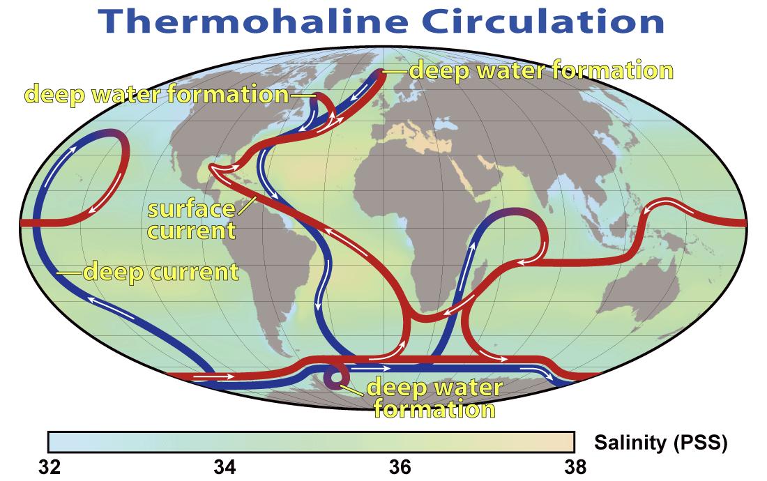 Circulatia termohalina