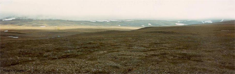 Wrangel Island Tundra