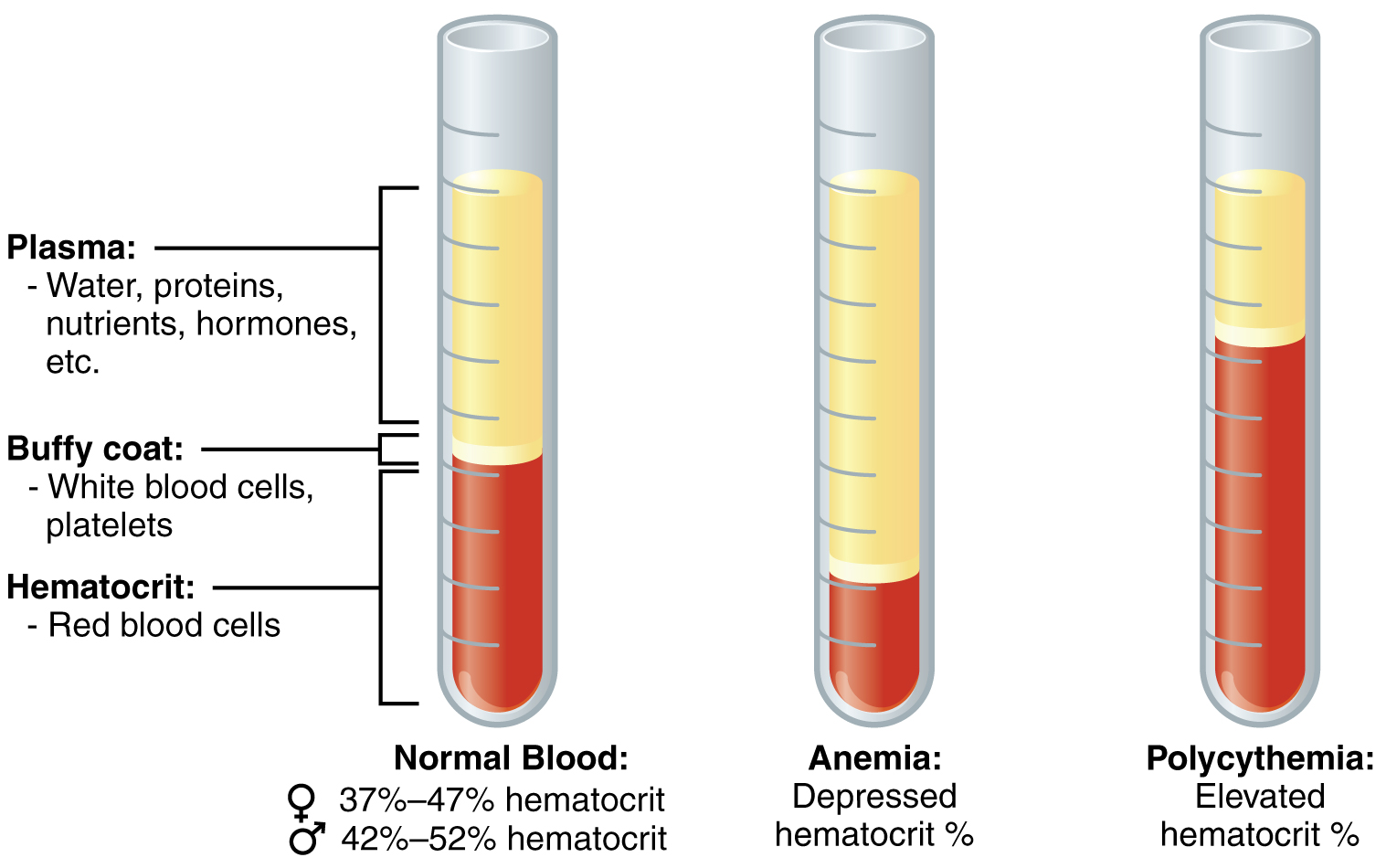 File Composition Of Blood