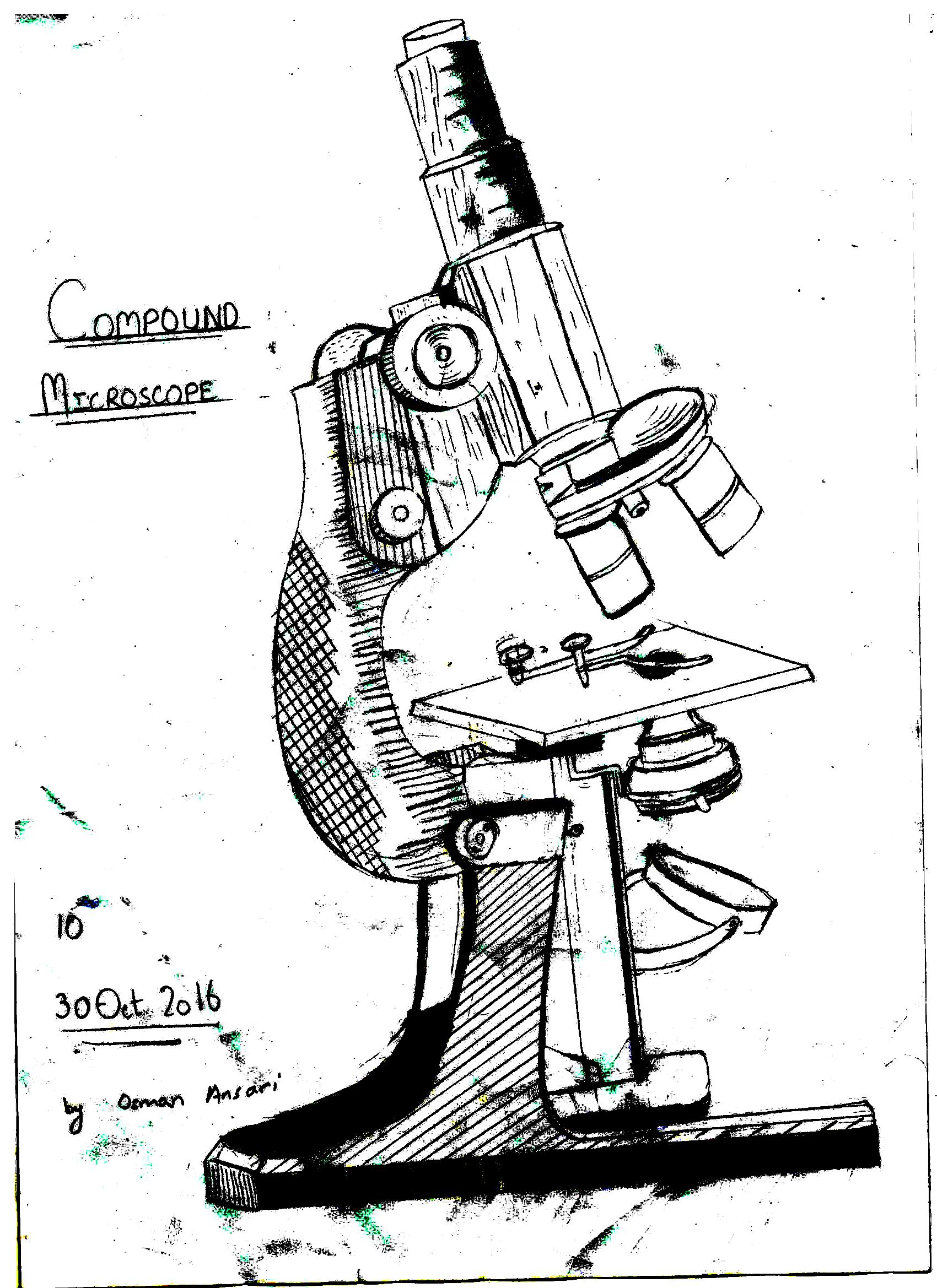 File Compound Microscope Drawing