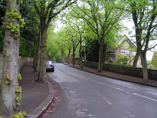 File:Leafy suburban street - geograph.org.uk - 170142.jpg