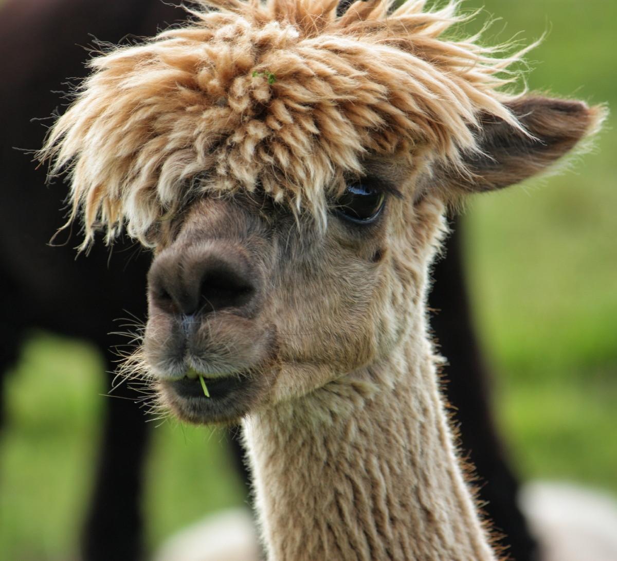 File Bad Hair Day Img