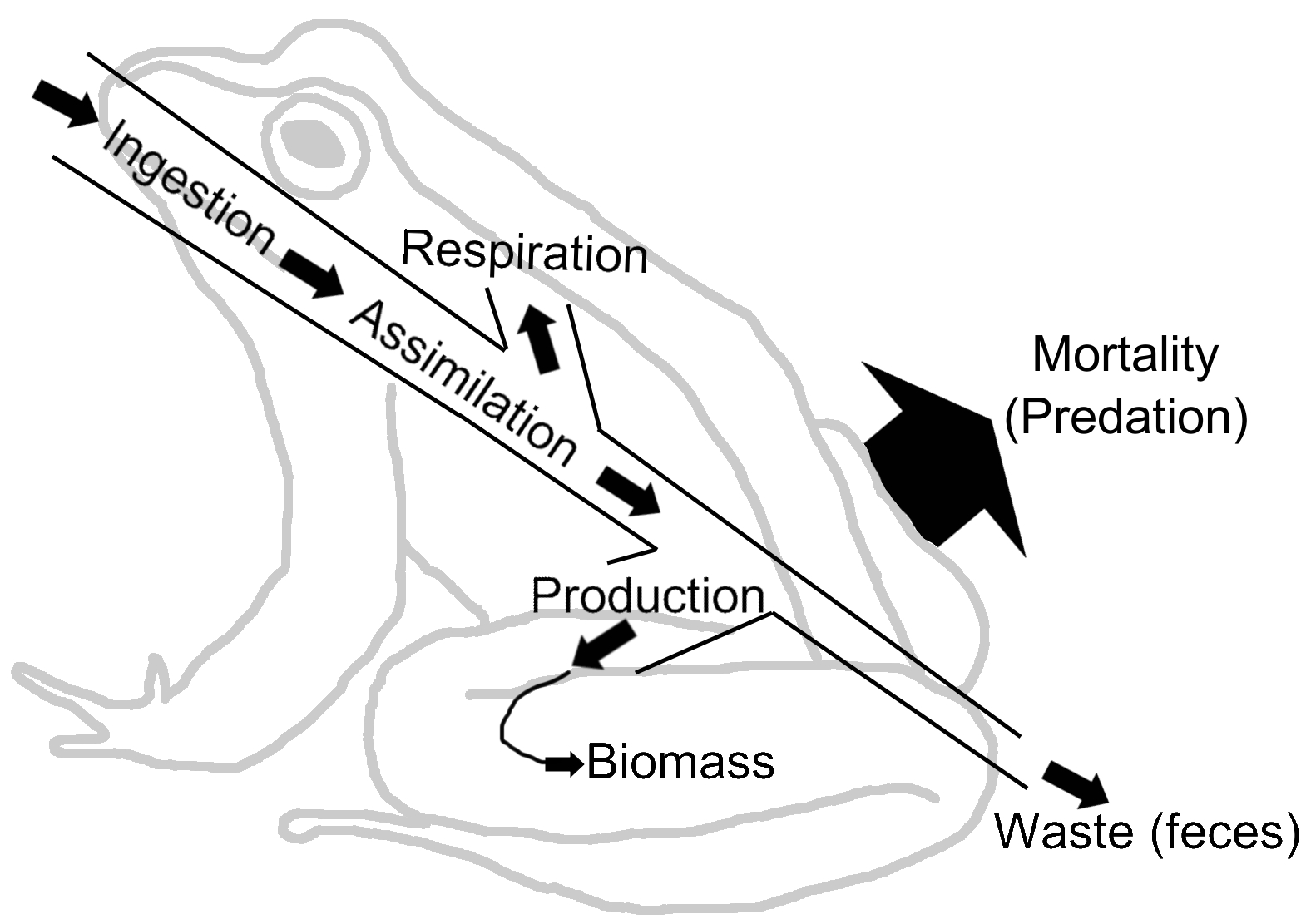 Energy Flow Ecology