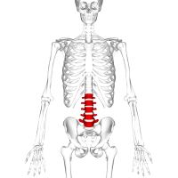 Lumbar Spine -- By Anatomography (en:Anatomography (setting page of this image)) [CC BY-SA 2.1 jp (http://creativecommons.org/licenses/by-sa/2.1/jp/deed.en)], via Wikimedia Commons