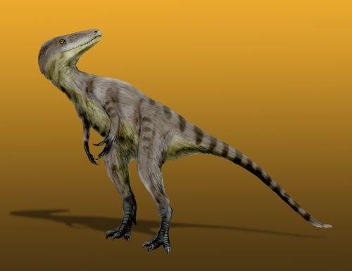 A tyrannoraptor, Xiongguanlong, by Nobu Tamura (GNU Free Documentation License)