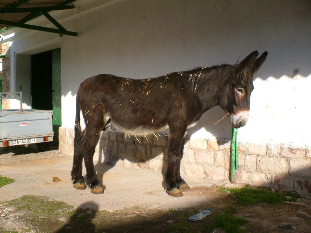 Agricultura y Ganadería destina 120.000 euros a impulsar y conservar las razas autóctonas