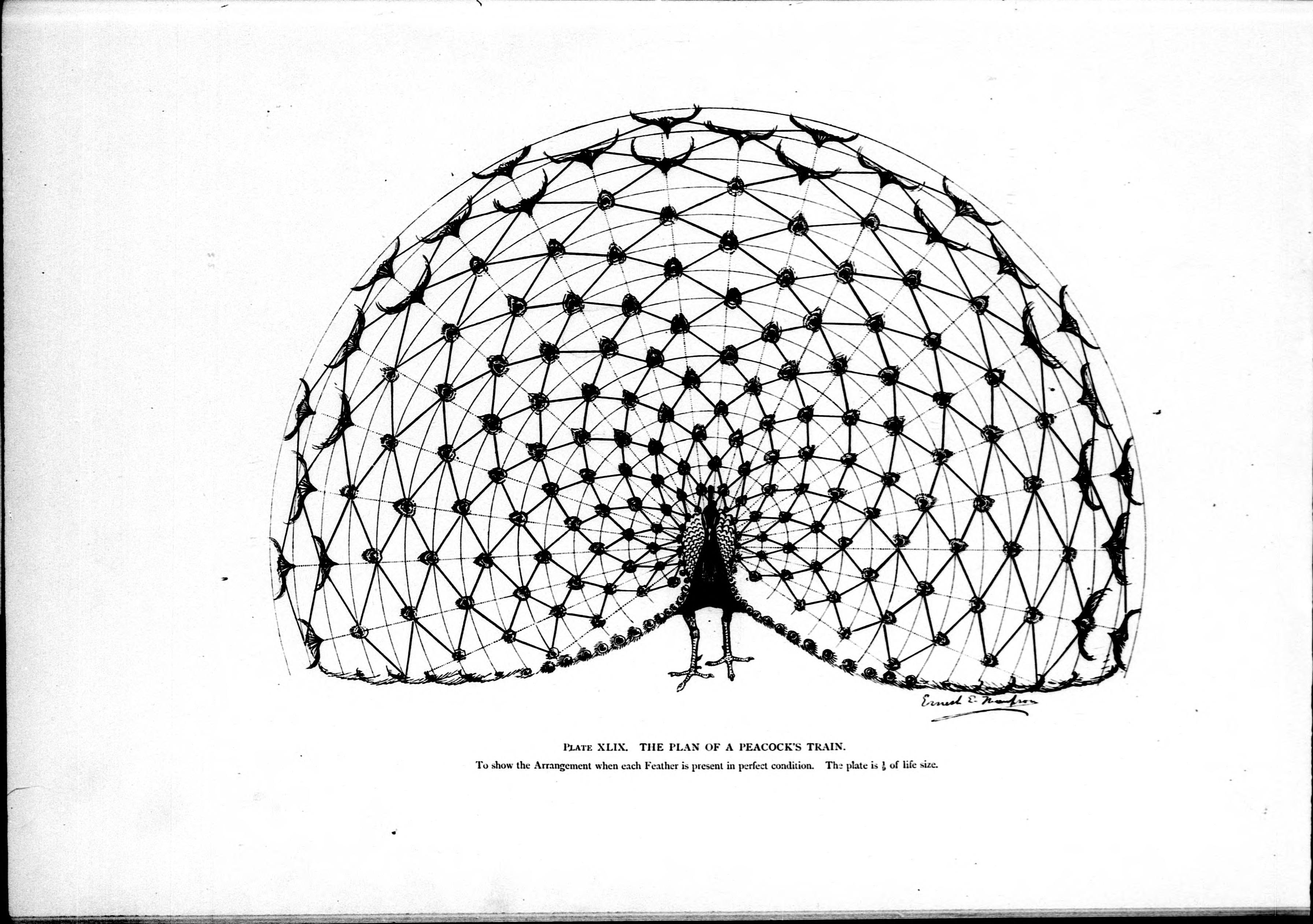 File Stu S In The Art Anatomy Of Animals Microform