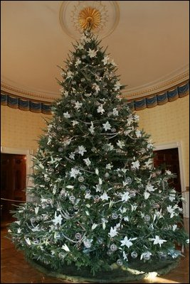 English: The 2005 White House Christmas Tree, ...