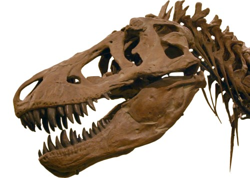 https://i2.wp.com/upload.wikimedia.org/wikipedia/commons/5/58/T-Rex2.jpg?resize=500%2C355&ssl=1