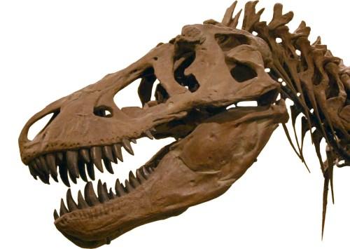 https://i2.wp.com/upload.wikimedia.org/wikipedia/commons/5/58/T-Rex2.jpg?resize=500%2C355&ssl=1