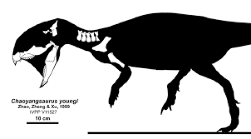 https://i2.wp.com/upload.wikimedia.org/wikipedia/commons/5/5a/Chaoyangsaurus.png?resize=490%2C271&ssl=1