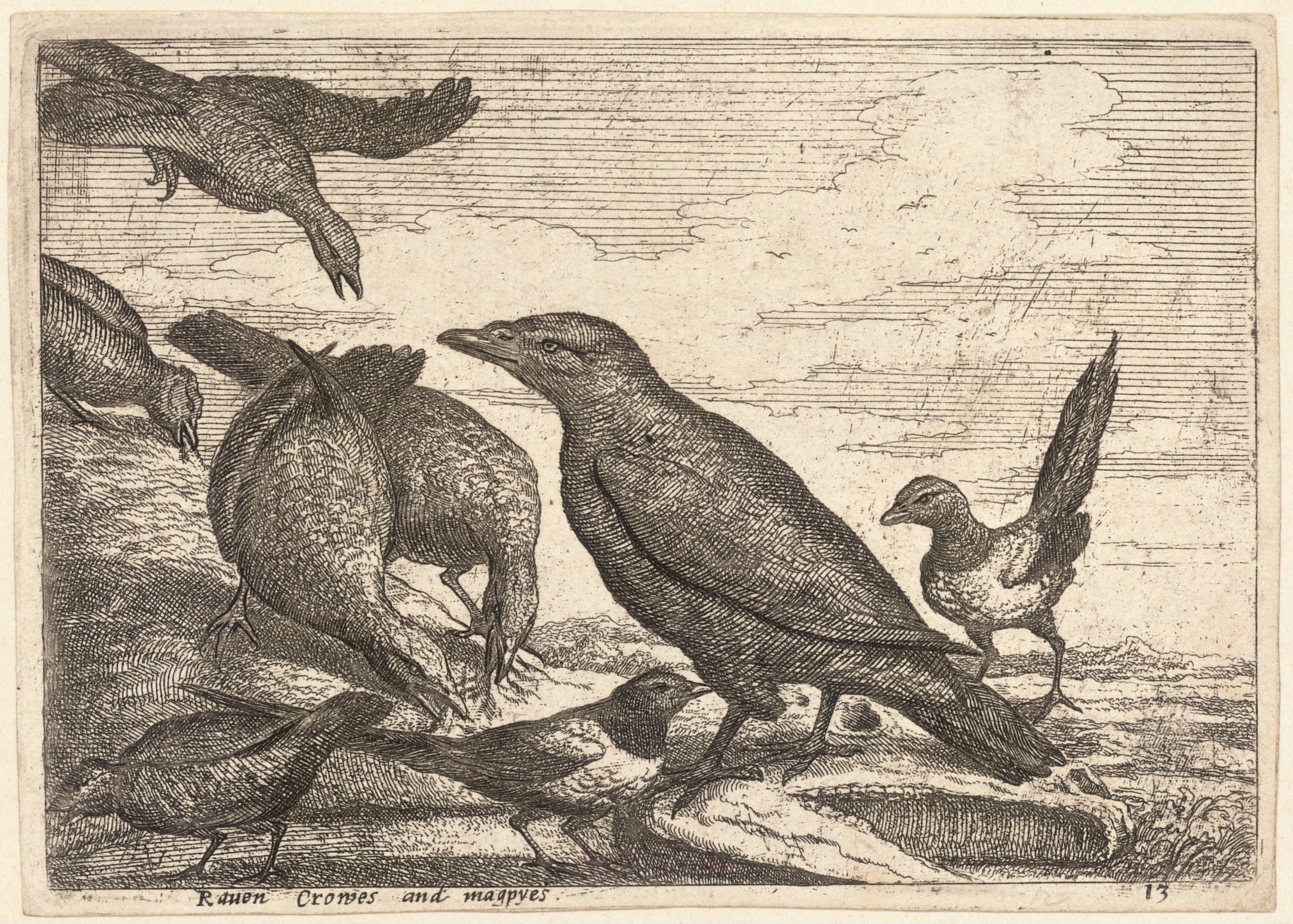 Wenceslas Hollar - Raven, crows and magpies