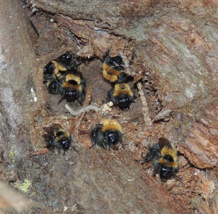The Broody Bee Keeping Backyard Bees