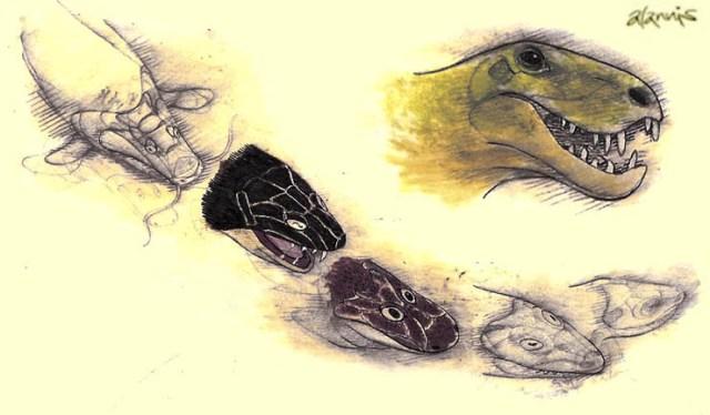 Desde los peces hasta los Sinápsidos, los ancestros de los mamíferos