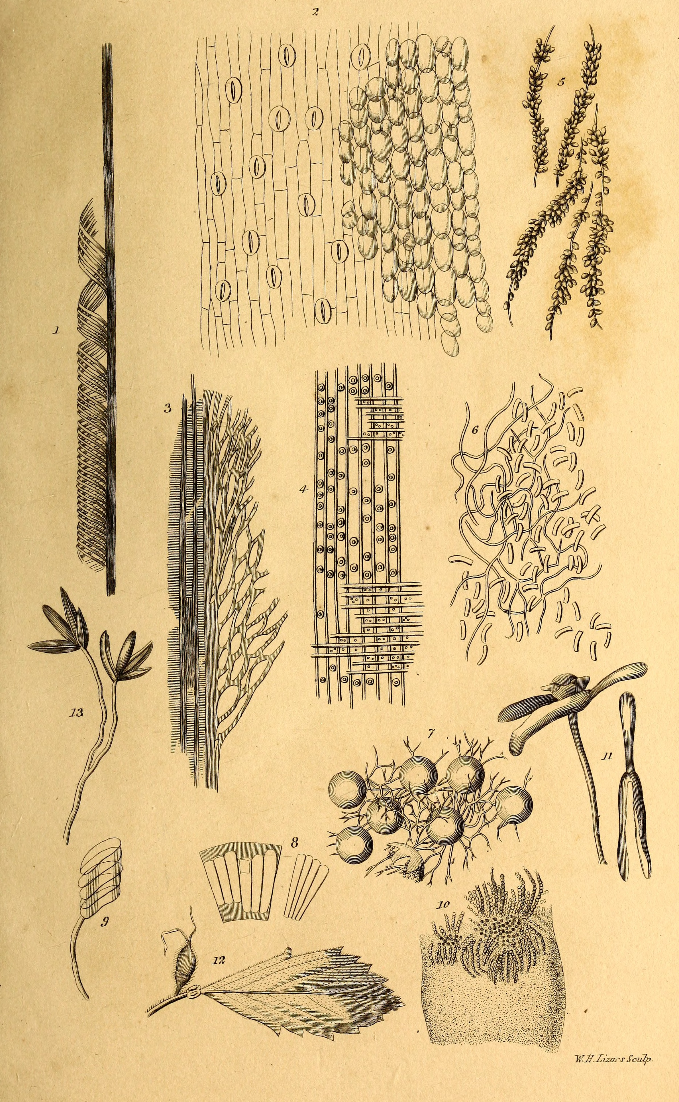 File Elements Of The Philosophy Of Plants