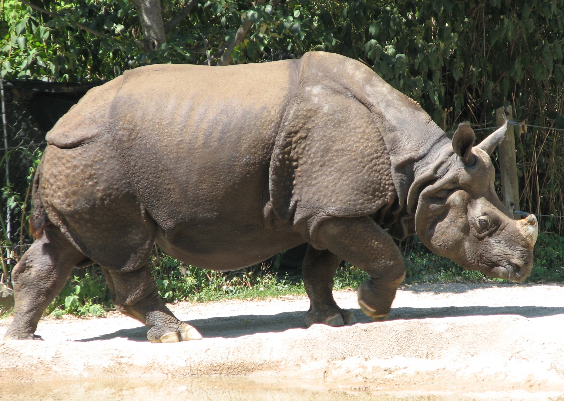 Rhino - wikimedia