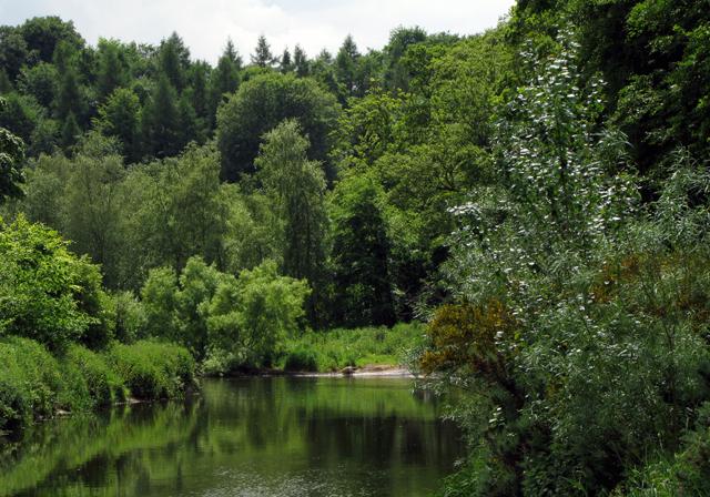 English: The Lagan near Shaw's Bridge The resp...