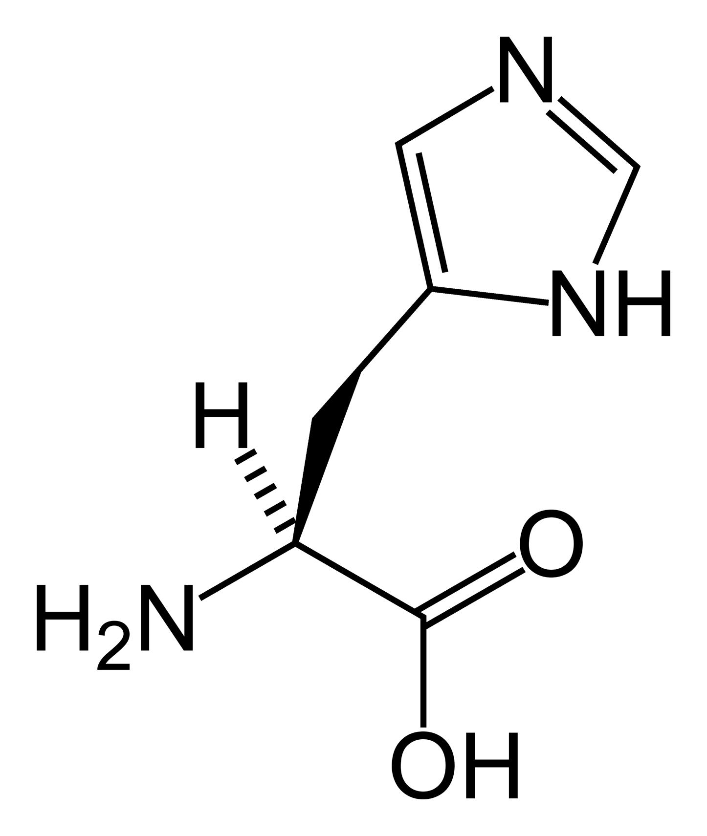 File L Histidine Skeletal