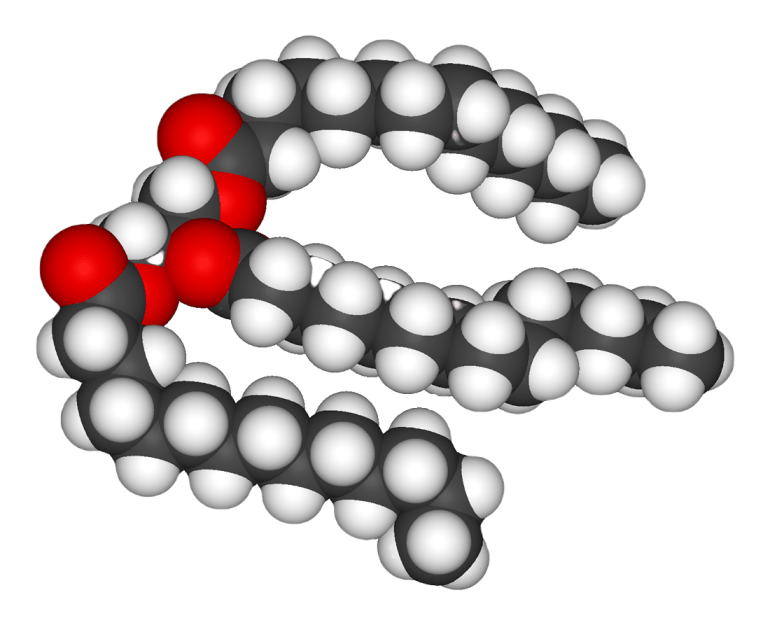 A space-filling model of an unsaturated triglyceride.