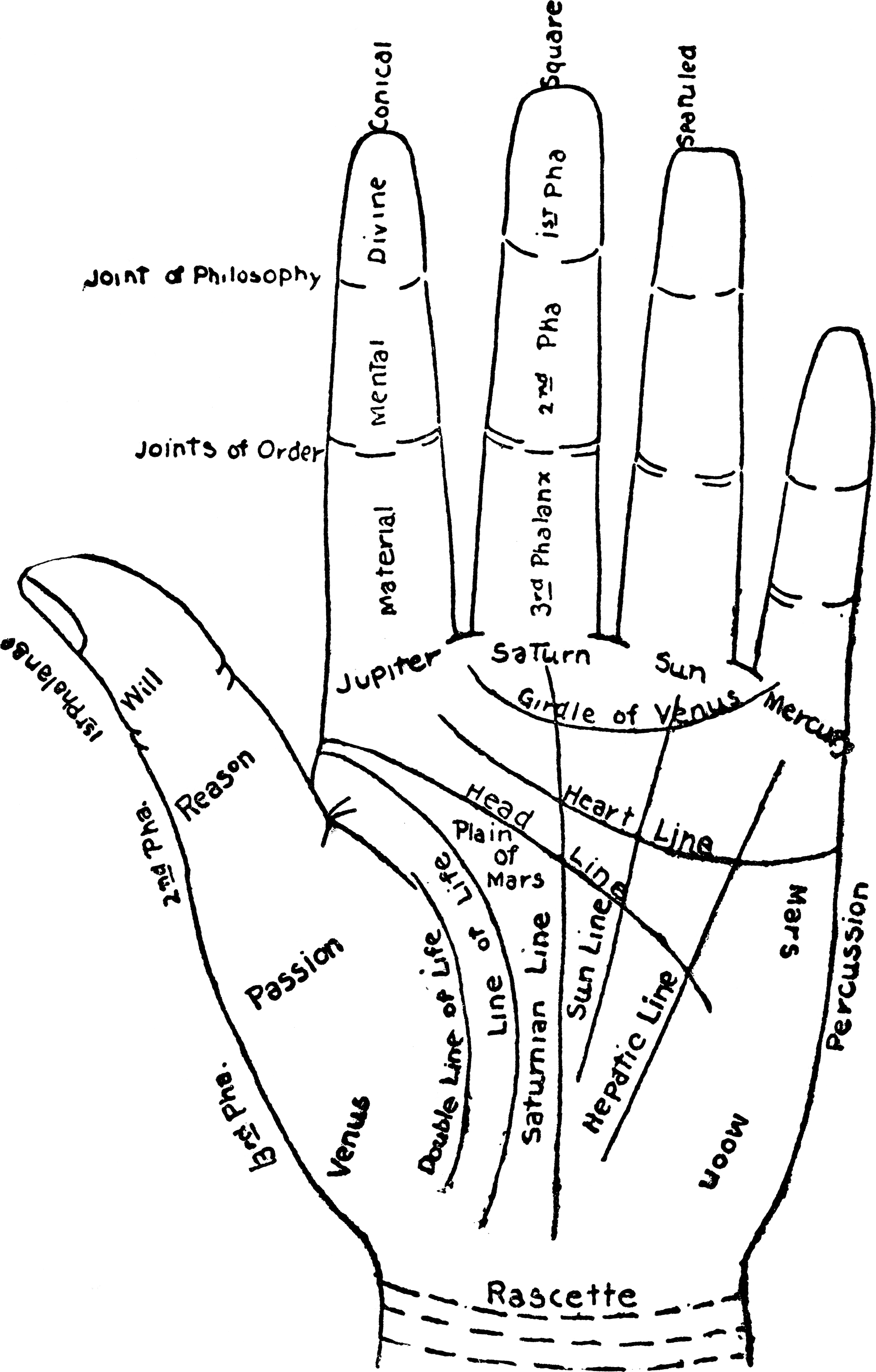 File Chart Of The Hand